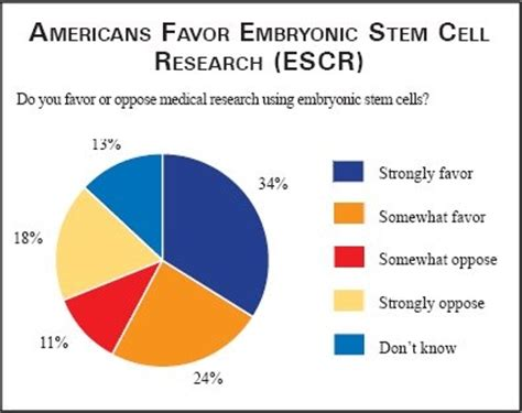 Should stem cell research be allowed essay